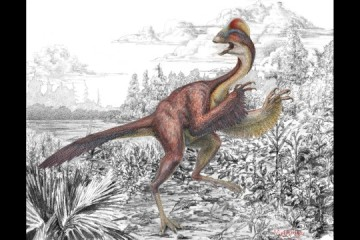 """University of Utah scientist discover a new dinosaur that resembled a 500 pound, 11 foot chicken. They call it """"the chicken from hell."""""""