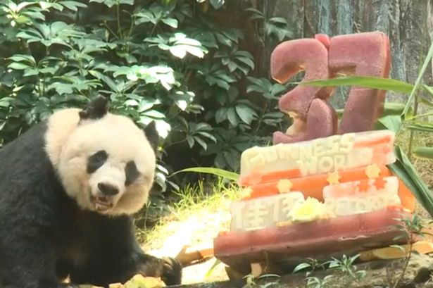 Celebrations: Jia Jia poses with her special birthday cake