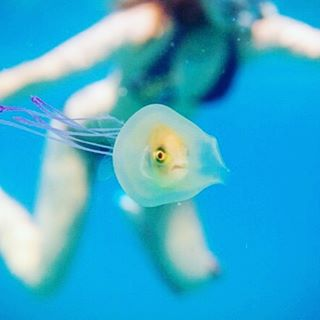 A-hapless-fish-swallowed-whole-by-a-jellyfish-tries-to-escape-in-this-image-by-ocean-photographer-Ti